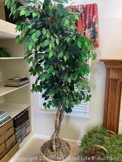 7' Silk Tree.