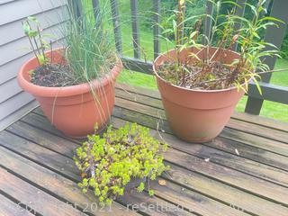 Trio of Planters